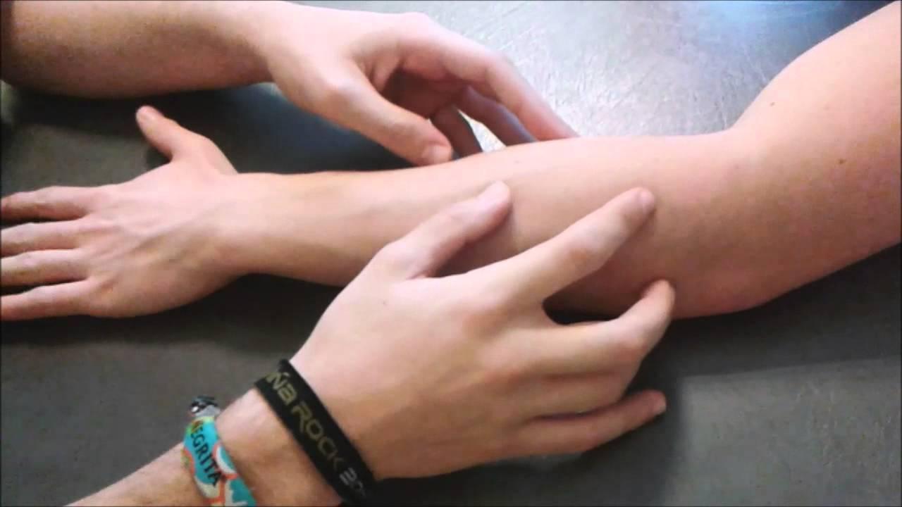 Valoraciones Fisioterapia. Anatomía palpatoria de brazo y mano ...