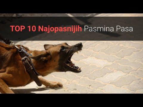 Opasni Psi - TOP 10 Najopasnijih Pasmina Pasa Na Svijetu! 🐕