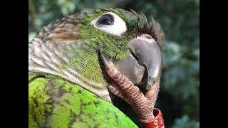 Самые смешные и умные попугаи. Приколы с попугаями. Most funny parrots.