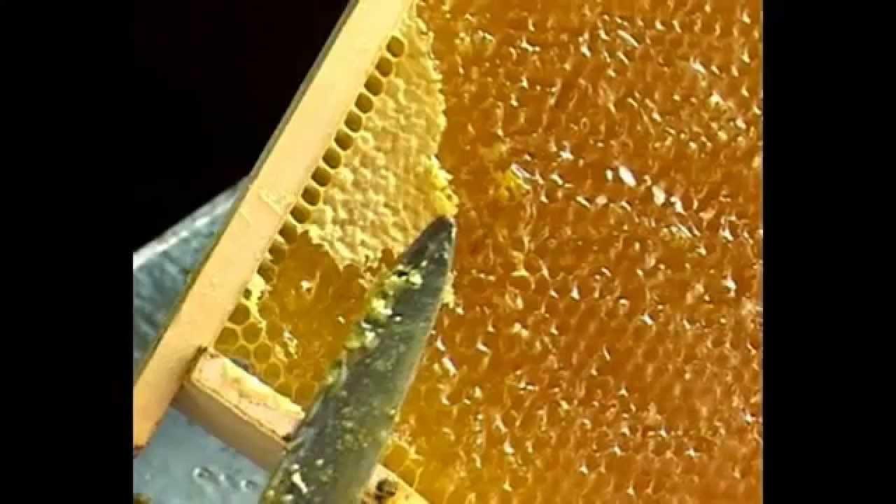 Пчелосемья цена