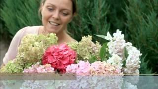 Hortensja ogrodowa-uprawa ,pielęgnacja