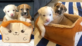 Foster Puppies Playing in a Bread Bed!
