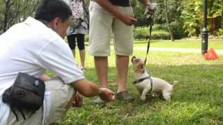 Dog Training In Singapore : Beyond Basic Obedience