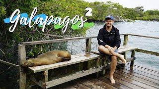 Jak jest na Galapagos? FLAMINGI - PINGWINY - REKINY  2/3 GDZIE BĄDŹ