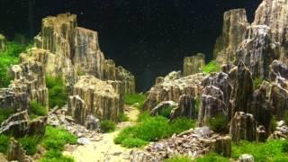 Конкурс Хрустальный аквариум 2016   Competition of aquarium design 'the Crystal  Aquarium 2016'