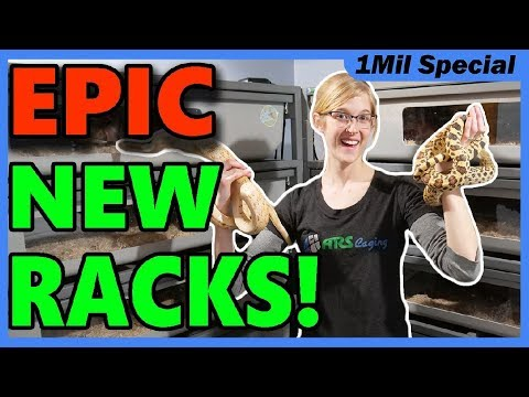 We Bought a New Rack for our Bullsnakes!!