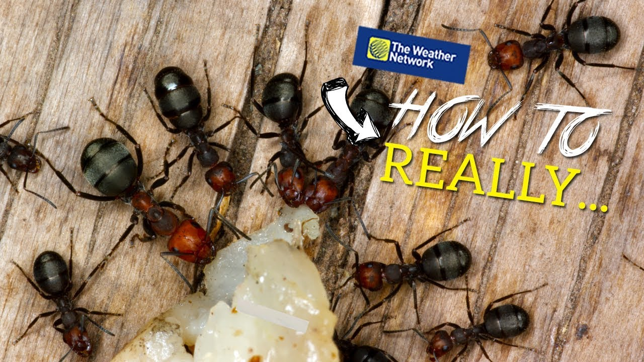 How To Really Get Rid Of ANTS Naturally (does Cinnamon