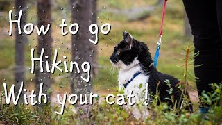 HIKING WITH YOUR CAT ? YOU CAN DO IT !