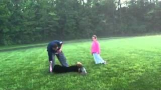4 Miesieczny Czarny Rosyjski Terier (trening)
