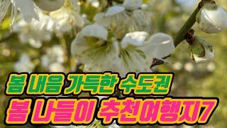 [수도권 가볼만한곳] 봄내음이 가득한 수도권 봄꽃 여행…