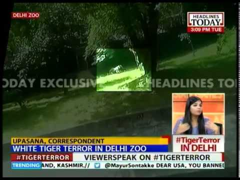 What was zoo security doing for 15 mins after boy fell into tiger enclosure?