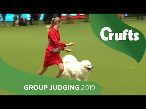 Pastoral Group Judging And Presentation | Crufts 2019