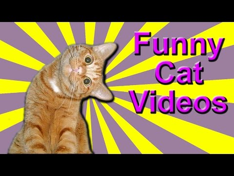 Funny Cat Videos – Massage Cats, Talking Cats, Obama Cat!