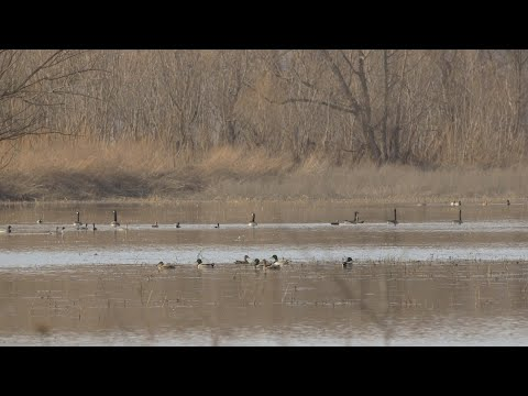 Waterfowl And Whitetail Hunting Property With Lodge For Sale Putnam County, IL (265 Acres)