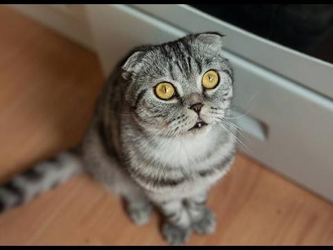 male neutered cat urinating indoors