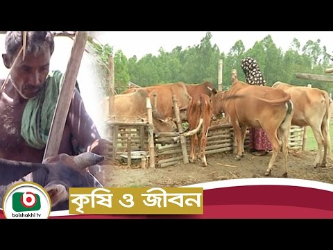 Krishi O Jibon | Rural Dairy Farming | Agriculture Development Program