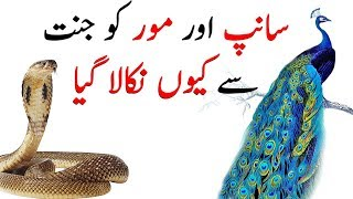 Sanp Aur Mor Ko Jannat Se Kiyun Nikala Gaya | Snake and Peacock Story | The Urdu Teacher