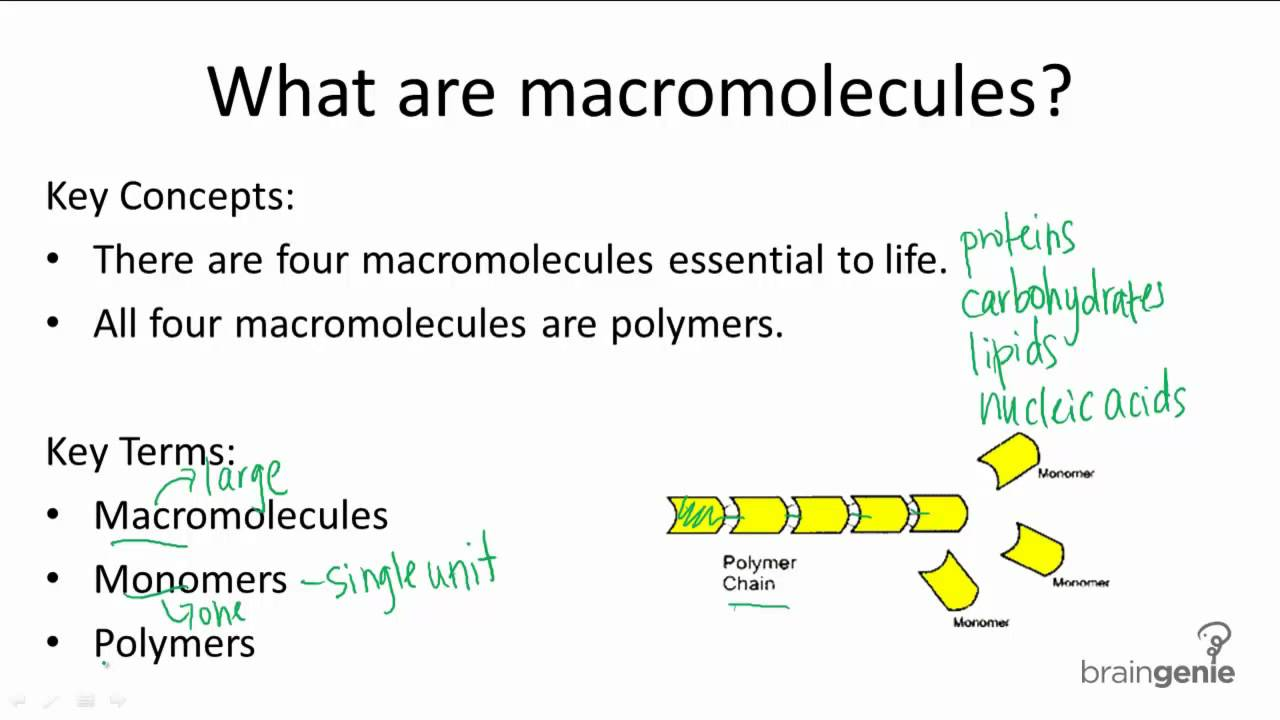 macromolecules of life lab Learn to identify the four basic biological macromolecules (carbohydrates, lipids, proteins, and nucleic acids) by structure and function.