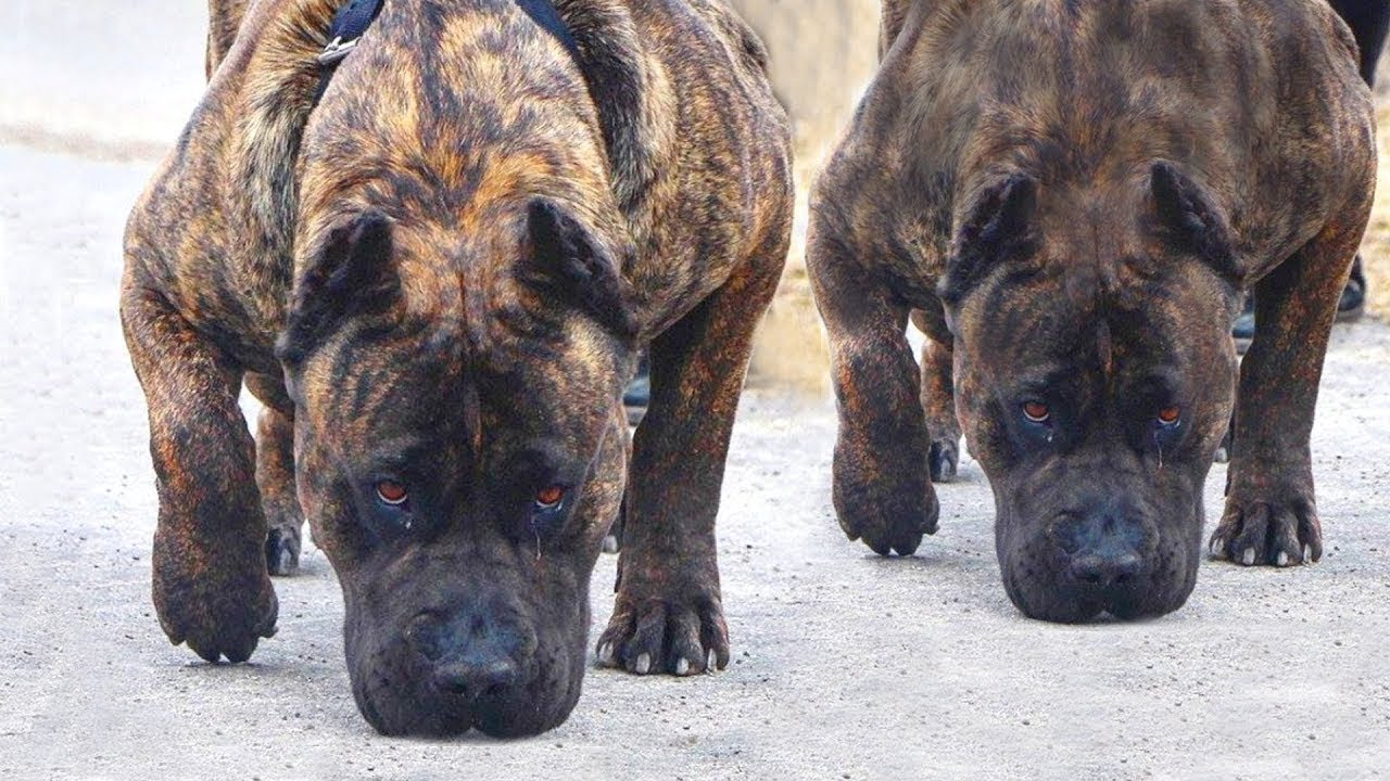 10 DOGS WITH MOST DANGEROUS LOOK