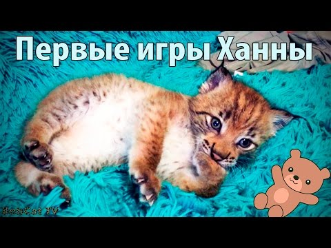 Игра Ухаживание за котом онлайн (Cat Breeder) - играть