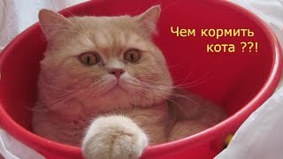 Обзор зоотоваров .Чудо средство уничтожитель запахов/корм для кота/Когтеточка
