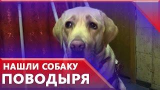 Полиция нашла украденную собаку-поводыря в питомнике