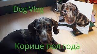 DOG VLOG Корице пол года\ щенок вырос.