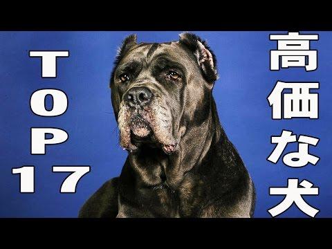 世界で最も高価な犬17選