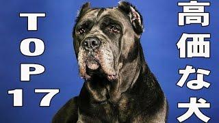 犬は人間の最高の友です。 愛くるしい毛むくじゃらのためにはどんな大金...
