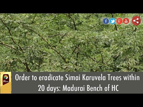 Order to eradicate Simai Karuvela Trees within 20 days