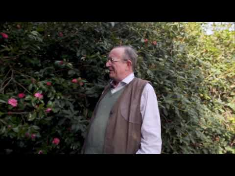 More on Camellia sasanqua from Caerhays - Part 2