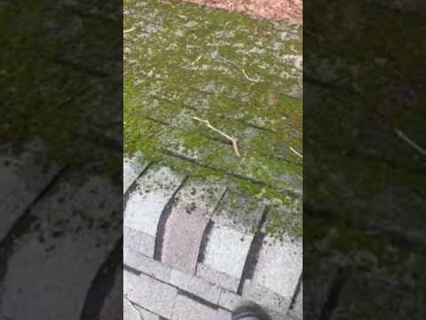 How To Clean Moss Mold Off Roof Shingles With Bleach Diy