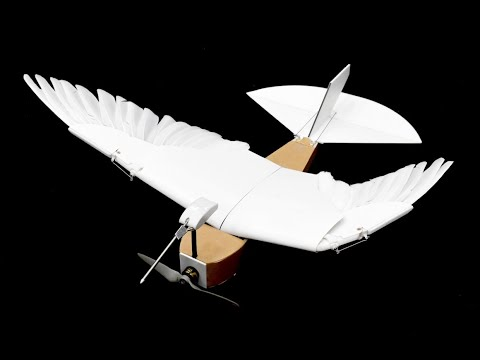 PigeonBot Uses Real Feathers to Explore How Birds Fly