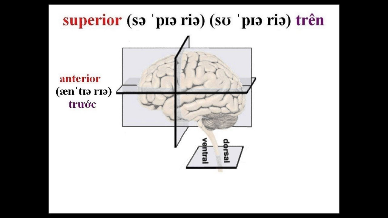 superior, anterior, posterior, ventral, dorsal, inferior - YouTube