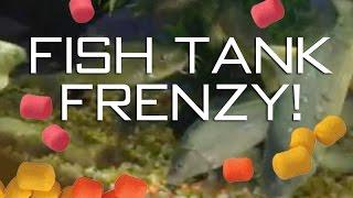 Fish Tank Frenzy!