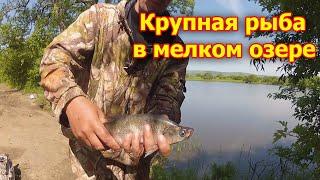 РЫБЫ МНОГО КЛЁВ ОТЛИЧНЫЙ Рыбалка на Озере После Нереста Карася Снасть Спиннинг Донка