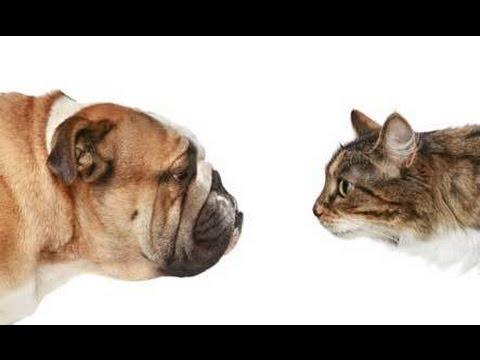 Pot câinii mânca hrană pentru pisici? 2 animale (nevoi diferite)
