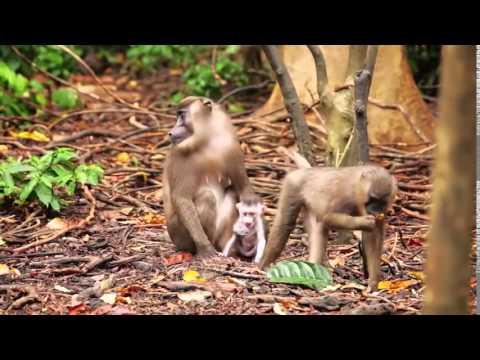Nigeria Tourism  Short Video