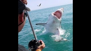 TOP GREAT WHITE SHARK PHOTOS