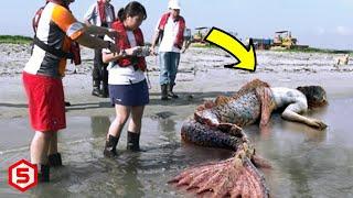 Kalian Tidak akan Percaya dengan 14 Penemuan Makhluk misterius Yang ditemukan di pinggir Pantai ini
