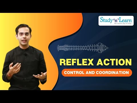 Reflex action mechanism