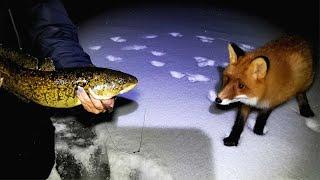Ночная зимняя рыбалка с хитрой лисой / Night winter fishing with a sly fox