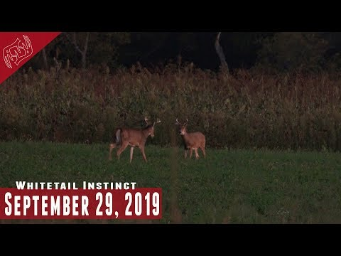 Hunting Near Food Sources: Hunting in the Wind