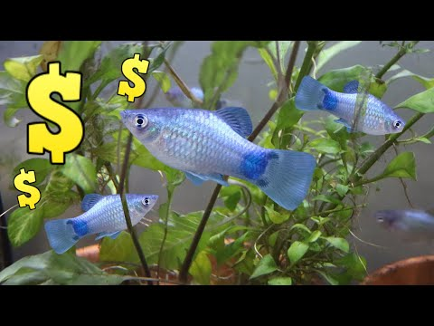 Plants And Fish For Profit Outside