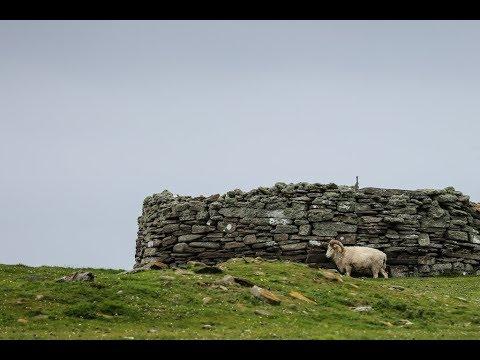 North Ronaldsay Sheep Festival 2017 - YouTube