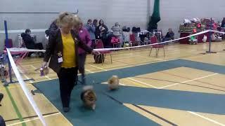 fylde dog show 1