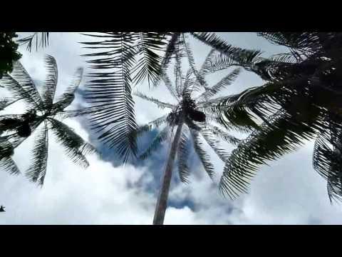 Técnicos do Inpa desenvolvem ferramentas para coleta de cachos de palmeiras – AÇAÍ