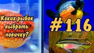 #116 КАКУЮ РЫБКУ ВЫБРАТЬ НОВИЧКУ??? РЫБКИ ДЛЯ НАЧИНАЮЩИХ. FISH FOR BEGINNERS.