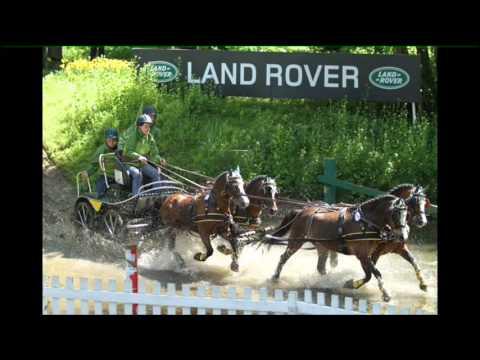 Welsh Pony Zaterdag
