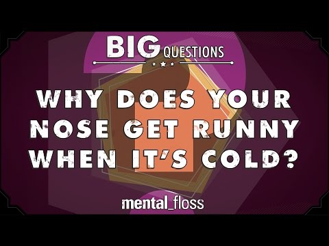 Why does your nose get runny when it's cold?  - Big Questions - (Ep. 40)